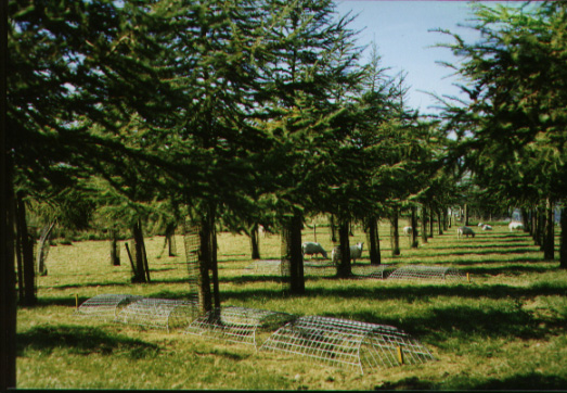 Exclusion cages under hybrid larch