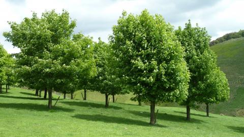Glensaugh silvopastoral agroforestry