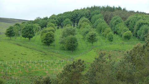 Image showing Agroforestry plot